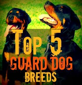 guarddoggies